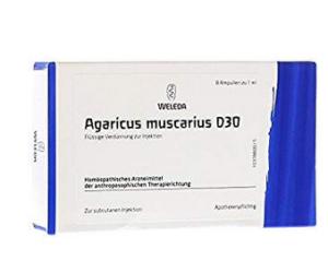 agaricus muscarius